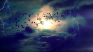 vogelvlucht2